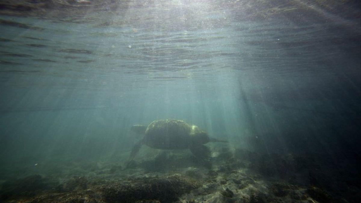 El Cabildo de Tenerife, defiende el impulso de reservas marinas como las de Anaga y Teno para garantizar la conservación del litoral de la isla