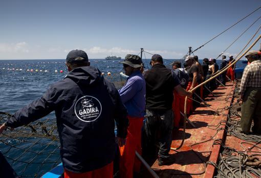 Viento 'de atunes' en las almadrabas de Cádiz: así se trabaja el oro rojo del mar que brilla en la cocina