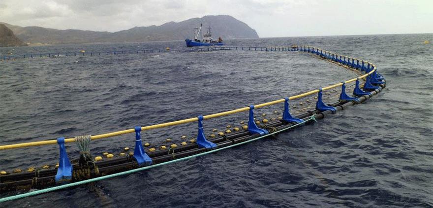jaula de atún, cria de atún