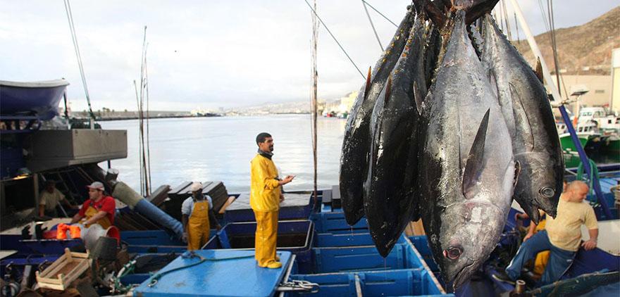 pesca atun-marruecos