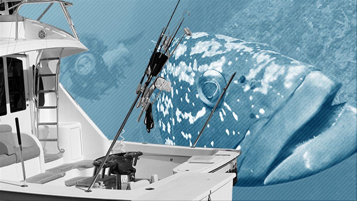 Gobierno de España, intenta cortar las redes de la pesca furtiva disfrazada de pasatiempo que diezma especies marinas