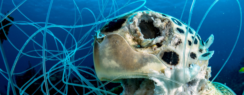 """Cómo la """"pesca fantasma"""" esquilma silenciosamente nuestros océanos"""