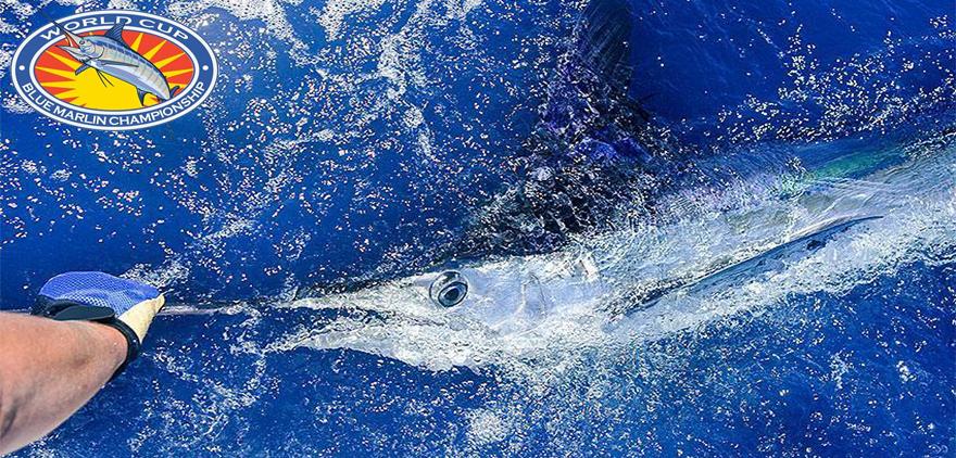 Proypesca consigue por segunda vez la autorización para que Canarias pueda volver a participar en el Campeonato del Mundo de Marlin Azul